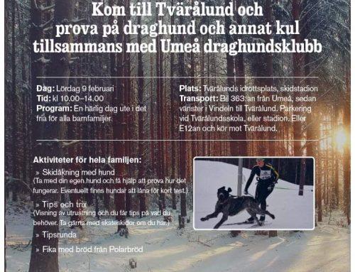 Draghundsklubb anordnar tävling i Tvärålund!